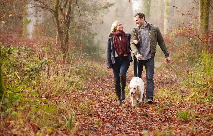 In den Wäldern haben Besitzer und Vierbeiner viel Spaß zusammen. (Foto: shutterstock - Monkey Business Images)